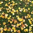 Yellow-green autumn rug 2 — Stock Photo