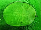 Leaf of the lunik — Stock Photo