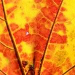 Yellow-orange leaf — Stock Photo