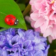 Royalty-Free Stock Photo: Toy ladybug and flowers