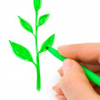 Hand drawing plant — Stock Photo #1181580