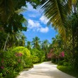 Pathway in tropical park - Stock Photo