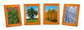 Four seasons (my photos) — Foto de Stock