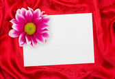 Greeting paper card and flower on red cl — Stock Photo