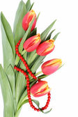 Tulip flowers isolated — Stock Photo