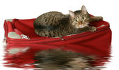 Rescue on a raft — Stock Photo