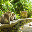 monkey forest — Stock Photo