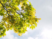 Autumnal scenery. — Stock Photo