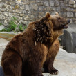 Brown bear in the Moscow zoo - Stock Photo