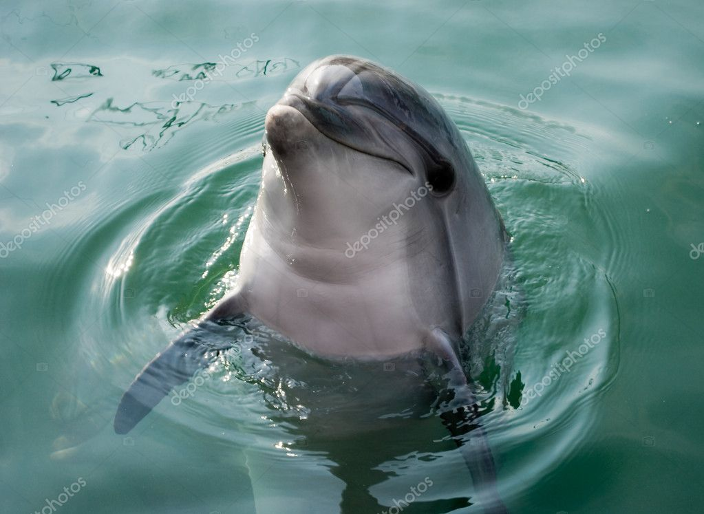Dolphin poses for the camera — Stock Photo #1511553