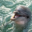 Stock Photo: Dolphin laughing