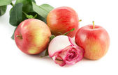 Rose and red apples — Stock Photo