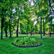 Green Flowerbed in city Kiev - Stock Photo