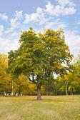 Tree — Foto Stock