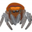 Royalty-Free Stock Vector Image: Spider. Big insect