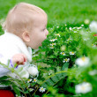 Child smelling camomiles — Stockfoto