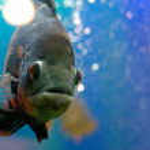 Black fish — Stock Photo #1220774