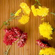 Sparsed flowers on bamboo — Stock Photo