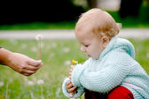 Giving a dandelion — Stock Photo