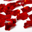 Sparsed petals — Stock Photo