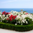 Rose bushes over sea view — Stock Photo