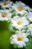 Sparse flowers — Stock Photo