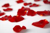 Sparsed rose petals — Stock Photo