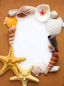 Frame with seashells — Stock Photo