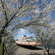 Blossoming tree and old motorboat — Stock Photo #1186360