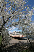 Blossoming tree and old motorboat — Stock Photo