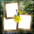 Stock Photo: Background with frame and flowers