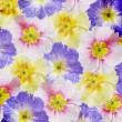 Grunge floral background — Stock Photo