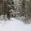 Winter wood — Stockfoto #1924487