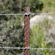 Stock Photo: Two strands of barbed wire fence