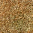 Hay texture background — Stockfoto