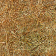 Hay texture background — Foto de Stock