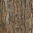 Stock Photo: Pine tree bark texture