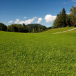 Stock Photo: Lush Alpine meadow in bright summer day
