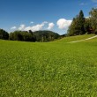 Lush Alpine meadow in bright summer day — Stock Photo #1174138