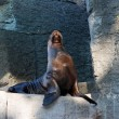 Stock Photo: Selion on artificial rock in zoo