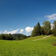 Lush Alpine meadow in bright summer day — Stock Photo #1215245