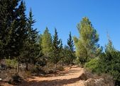 Hiking trail in pine and cypress woods — Stock Photo