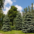 Trees in the park on bright summer day - Stock Photo
