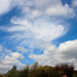 Cumulus clouds in blue sky above trees — Stock Photo