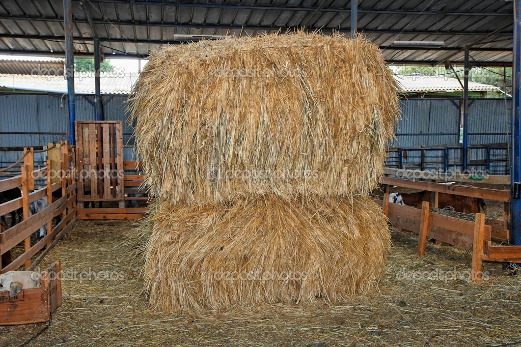 Haystacks at the agricultural farm stored for animal feed  Foto Stock #2059115