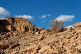 Rocky desert landscape with dry bush — Stock Photo