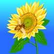 Royalty-Free Stock Obraz wektorowy: Sunflower