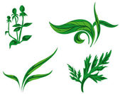 Kinds of plants — Stock Vector