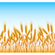 Field of wheat - Stock Vector
