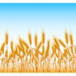 Royalty-Free Stock Immagine Vettoriale: Field of wheat